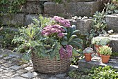 Autumn-planted basket ornamental cabbage and palm kale with sedum