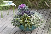 Turquoise shell with Brassica, sage 'Purpurascens' 'Tricolor'