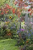 Small autumn garden with perennials and summer flowers