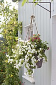 Hanging basket with Petunia surfinia 'Snow' and Lantana Bandana