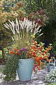 Physalis alkekengi (Lampion flower), Sedum (Stonecrop), Pennisetum