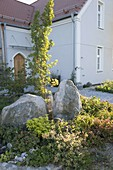 Front garden with boulders, Quercus robur 'Fastigiata'