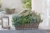Korbkasten bepflanzt mit Sukkulenten