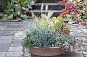 Terracotta bowl with succulents and grass