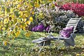 Lounger under apple tree in autumnal garden