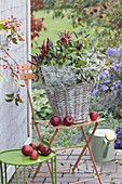 Autumn basket with chili 'Pretty in Purple', sage
