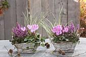 Baskets with Erica gracilis 'Beauty Queens' (pot erika), Cyclamen