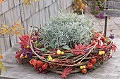 Autumn wreath of clematis tendrils, decorated with Acer leaves