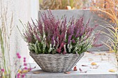 Basket with Calluna Trio 'Beauty Ladies' in white, red and purple