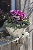Violet cabbage (Brassica) with lavender wreath (Lavandula)