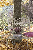 Basket with Calluna vulgaris in white and red on bench