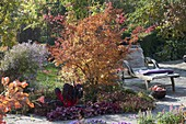 Colorful autumnal bed with Acer palmatum 'Katsura'