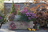Homemade wooden box planted autumnally, Chrysanthemum