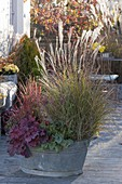 Old zinc tub with grasses and foliage perennials