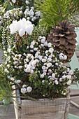 Green-white planted autumn box, Pinus (Pine), Pernettya