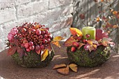 Autumnal baskets of moss and wire wine with malus