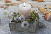 Small candle deco with Clematis (clematis) seeds