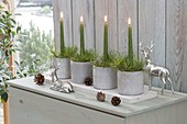 Advent arrangements of green candles and pinus (pine) in concrete pots