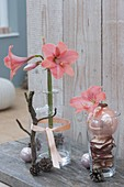 Single Hippeastrum (Amaryllis) flower in glass bottle