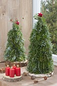 Tied Christmas trees from abies (fir) on wooden discs