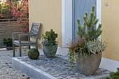 Bepflanzte Töpfe am Hauseingang : Pinus (Kiefer), Calluna vulgaris