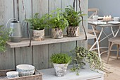 Indoor plants in pots with birch bark, hanging board saves space