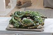 Succulent wreath of Echeveria and Sedum morganianum