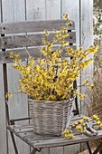 Witch hazel 'Arnold Promise' (witch hazel) tiwgs bouquet