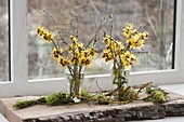 Hamamelis bouquets 'Arnold Promise' (witch hazel)
