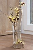 Modern decoration with branch of Hamamelis 'Pallida'