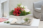 Winter arrangement of amaryllis and pinus