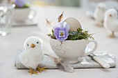 Easter table decoration, cup with viola cornuta blossoms