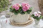 Primula 'Romance' in a romantic vessel, wreath of grasses