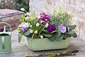 Baking dish with spring flowers: Primula acaulis, Muscari