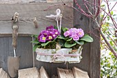 Basket with Primula acaulis, covered with birch bark