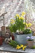 Plant Zinc jardiniere in spring