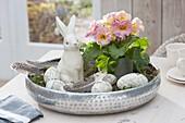 Silver tray with primula acaulis (primrose), ceramic Easter bunny