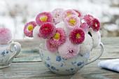 Posy from Bellis (daisies) in grandma's old flower cup