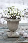 Galanthus nivalis (snowdrop) bouquet