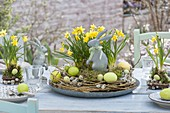Table Decoration with Narcissus 'Tete A Tete' (Daffodil)