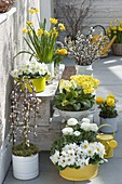 Spring in yellow-white on the terrace