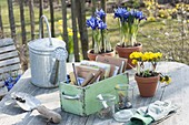 Sow planning: seeds and utensils in wooden box, pots