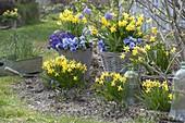 Spring awakening in blue-yellow
