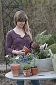 Woman is planting wooden box with perennials and herbs