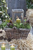Lantern in basket on straw bales, Pinus cones and branches