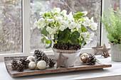 White houseplants