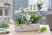 Spring greeting in wooden basket, small bouquets of wild garlic