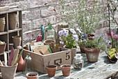 Work table with viola cornuta, and rosemary