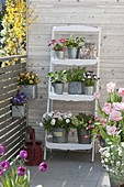 Spring flowers and herbs in zinc pots