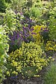 Flowerbed with Erysimum 'dwarf', E. Poem 'Lilac'